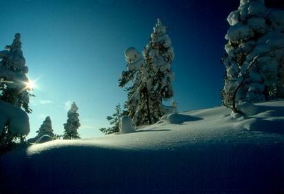 resize-of-winterforest02.jpg