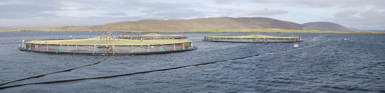 Shetland salmon farm in North Atlantic waters